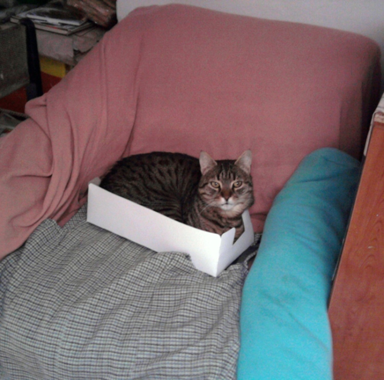 box_kitty