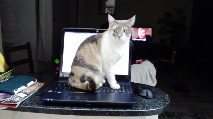 newsletter kitty