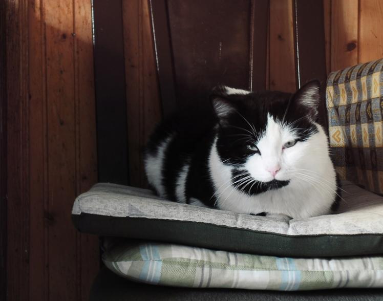cushion king