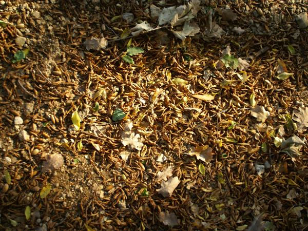 leaf_forest_2